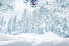 De winter bosachtergrond Stock Afbeelding