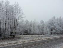 De winter bosachtergrond royalty-vrije stock foto's