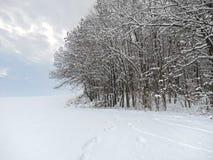 De winter bosdetail Royalty-vrije Stock Foto's