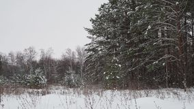 De winter boslandschap stock footage