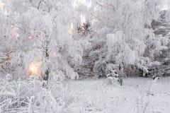 De winter boslandschap Mooi die Sneeuwwitje, met Rijp, de Winterberk Forest Sun, Snow-Covered Berkbosje en Sneeuw wordt behandeld Royalty-vrije Stock Fotografie
