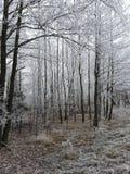 De winter bosrahachow stock afbeelding