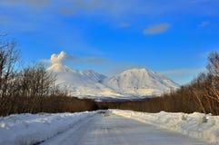 De winter bosscène met landweg Royalty-vrije Stock Foto's