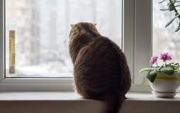De winter buiten het venster De kat zit op de vensterbank in de winterweer royalty-vrije stock afbeeldingen