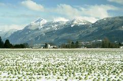 De Winter Chilliwack van bergen BC Stock Foto's