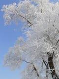 De winter in China, Eiland Wusong Stock Foto