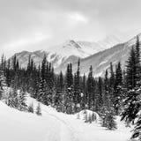 De winter in de Canadese Rotsachtige Bergen Stock Afbeeldingen