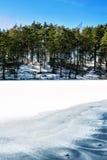 De winter/de lentebos met ornament op bevroren meer outdoors royalty-vrije stock foto