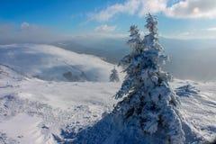 De winter, de Oekraïne, berg, Karpatische zonsondergang, bergketen, landschappen, toerisme, sneeuwreis, in openlucht, hemel, mist Stock Afbeelding