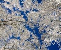 De winter in de Vogezen-bergen, Frankrijk Royalty-vrije Stock Afbeelding