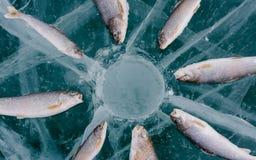 De winter die op het meer vist Royalty-vrije Stock Foto
