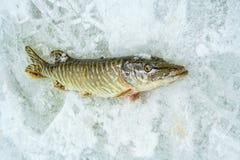 De winter die op ijs vissen Stock Afbeelding