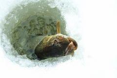 De winter die op ijs vissen Stock Fotografie