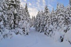 De winter dirkt bos in de Ural-Bergen op, Rusland, Chelyabinsk-gebied, Minyar Pushkin` s fee tal Royalty-vrije Stock Afbeelding