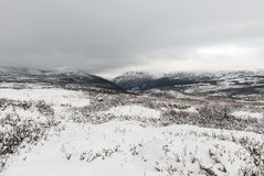De winter Dovrefjell Stock Afbeelding