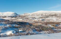De winter Dovrefjell in Noorwegen Stock Afbeeldingen