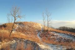 De winter in duinen Stock Fotografie