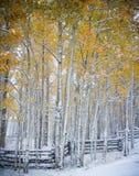 De winter en Autumn Collide in Colorado Stock Afbeeldingen