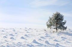 De winter en sneeuwscène Stock Foto