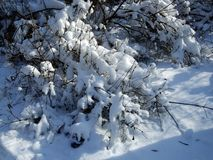 De winter en sneeuwtak onder de bomen in het park Royalty-vrije Stock Fotografie