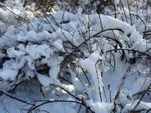 De winter en sneeuwtak onder de bomen in het park Stock Foto's