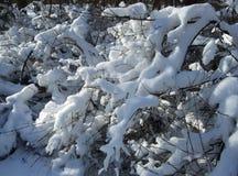 De winter en sneeuwtak onder de bomen in het park Royalty-vrije Stock Afbeelding