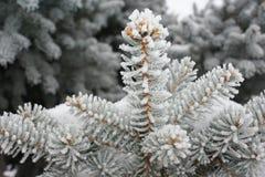 De winter en de vorst leiden tot een mooi sprookje Stock Foto's