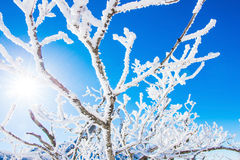 De winter en zonnig in deogyusan, Korea Royalty-vrije Stock Afbeelding