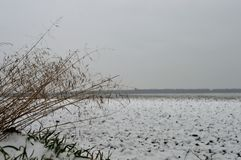 De winter field Stock Foto