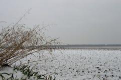 De winter field Stock Foto