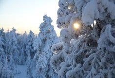 De winter in Finland Stock Afbeeldingen