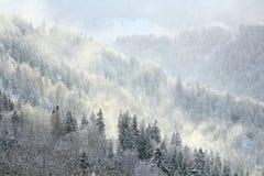 De winter Forest Hill Scene In Fog stock afbeelding