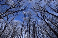 De winter Forest With Hoarfrost royalty-vrije stock foto