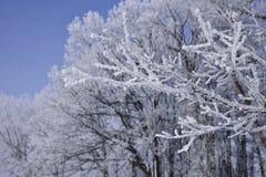 De winter Forest Hoarfrost stock afbeelding