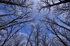 De winter Forest With Hoarfrost royalty-vrije stock afbeeldingen