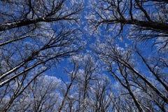 De winter Forest With Hoarfrost royalty-vrije stock fotografie