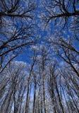 De winter Forest With Hoarfrost stock foto