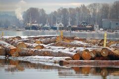 De winter Forest Logging Royalty-vrije Stock Foto's