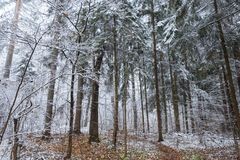 De winter forestThe dorp van nikola-Lenivets Stock Fotografie