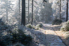 De winter Forrest Stock Foto's