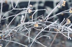 De winter FrostClose omhoog van een bevroren boomtak stock afbeelding