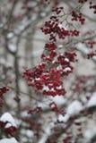 De winter is gekomen royalty-vrije stock foto