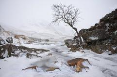 De winter in Glen Coe Stock Afbeeldingen