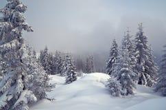 De winter in het bergbos Stock Afbeeldingen