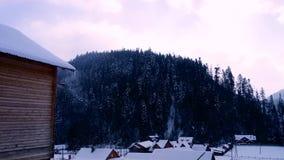 De winter in het bos stock footage