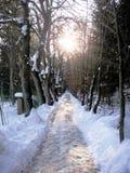 De winter in het bos Stock Afbeelding