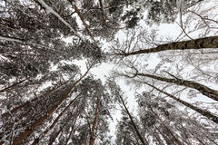 De winter in het bos Royalty-vrije Stock Foto