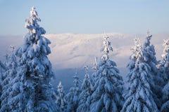 De winter in het bos Royalty-vrije Stock Afbeeldingen