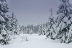 De winter in het bos Royalty-vrije Stock Afbeelding