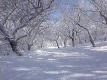 De winter in het bos Stock Afbeeldingen